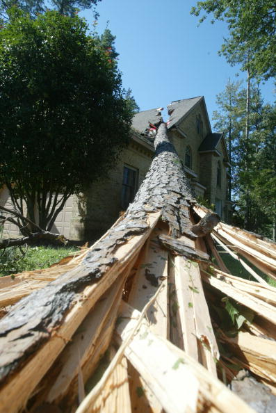 Tree「Virginia Cleans Up From Hurricane Isabel」:写真・画像(15)[壁紙.com]