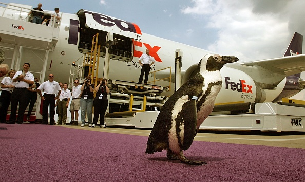 Animal Wildlife「Penguins And Otters Return To The New Orleans Aquarium」:写真・画像(9)[壁紙.com]