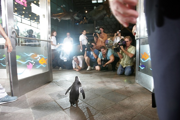 Animal Wildlife「Penguins And Otters Return To The New Orleans Aquarium」:写真・画像(15)[壁紙.com]
