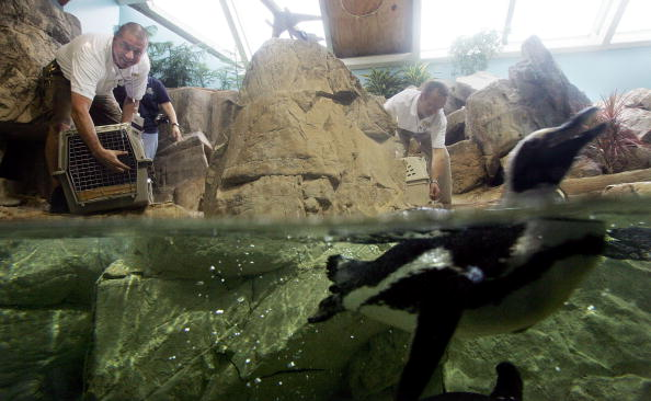 Animal Wildlife「Penguins And Otters Return To The New Orleans Aquarium」:写真・画像(15)[壁紙.com]