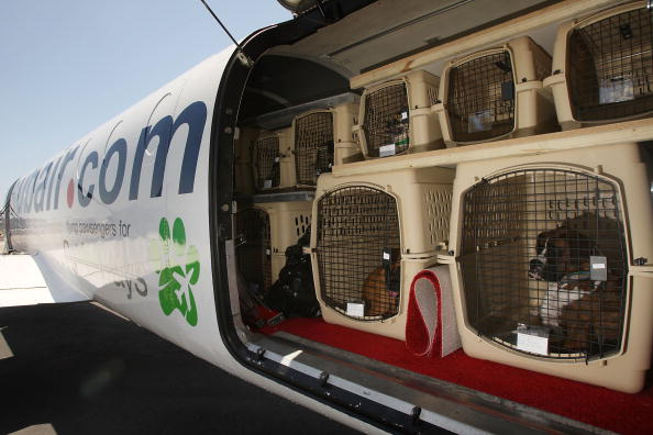 Animal「Airline For Pets Starts Flying In Select US Cities」:写真・画像(3)[壁紙.com]