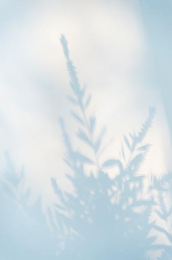 Shadow「Plant and Shrub Shadow」:スマホ壁紙(6)