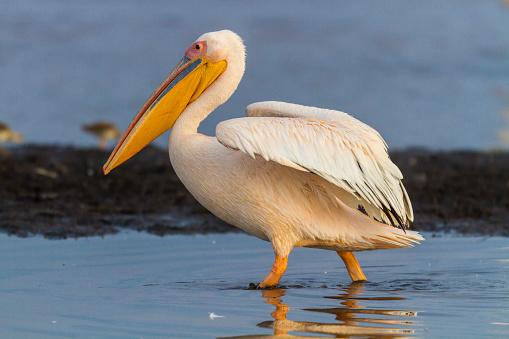 Shallow「White Pelicans at Lake Nakuru National Park.」:スマホ壁紙(7)
