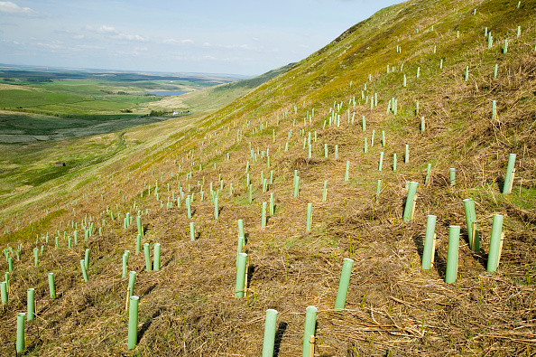 Tree「Tree planting to absorb C02 emmissions, Geltsdale, Cumbria, UK」:写真・画像(5)[壁紙.com]