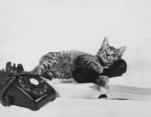 Using Phone「Chatty Cat」:写真・画像(17)[壁紙.com]