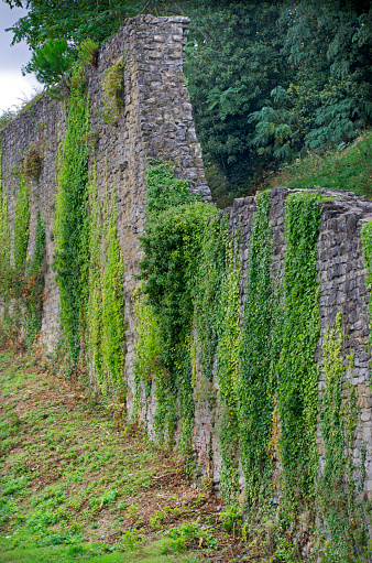 Battle「Arezzo Medieval Wall with Moss」:スマホ壁紙(0)