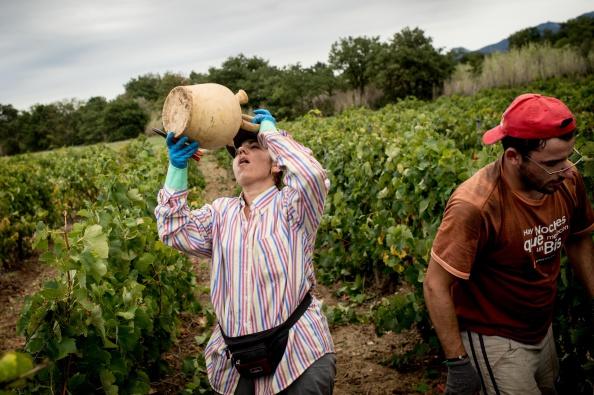 Languedoc-Rousillon「Spanish Emigrants Travel To Perpignan For French Wine Harvest」:写真・画像(10)[壁紙.com]