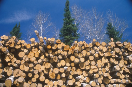 Deforestation「Recently cut logs awaiting processing at a Wisconsin mill」:スマホ壁紙(6)