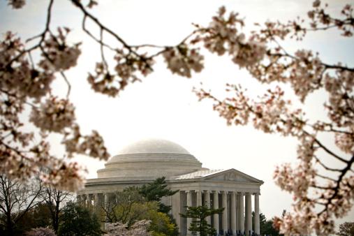Cherry Blossom Festival「ジェファーソン記念館」:スマホ壁紙(4)