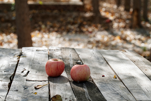 Picnic Table「apple on picnic table in autumn forest」:スマホ壁紙(17)