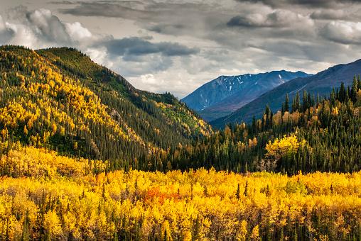 Boreal Forest「Alaska; Autumn Colors; Denali National Park」:スマホ壁紙(19)