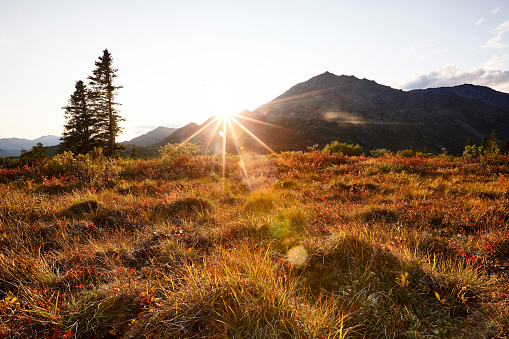 Solitude「USA, Alaska, autumn in Denali National Park」:スマホ壁紙(5)