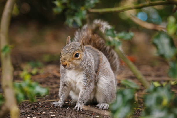Eastern Gray Squirrel:スマホ壁紙(壁紙.com)