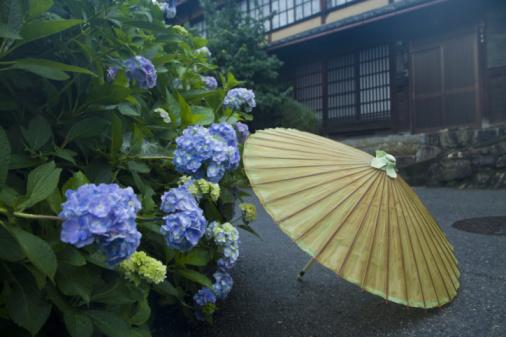 あじさい「Parasol next to hydrangeas, Sakamoto, Otsu, Shiga Prefecture, Japan」:スマホ壁紙(13)
