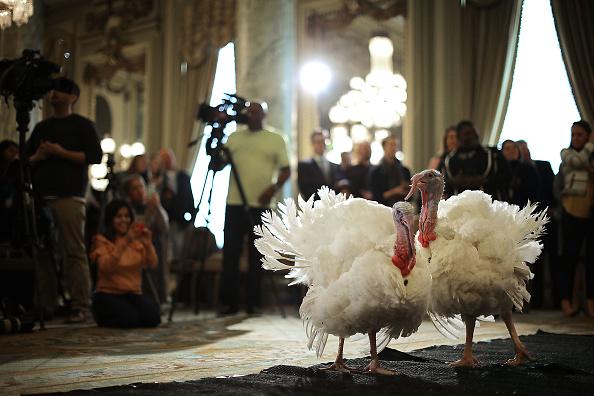 Chip Somodevilla「National Thanksgiving Turkey Meets The Press Ahead Of Presidential Pardoning」:写真・画像(1)[壁紙.com]