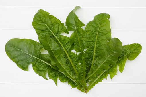 たんぽぽ「Nutritious dandelion leaves for salads.」:スマホ壁紙(18)