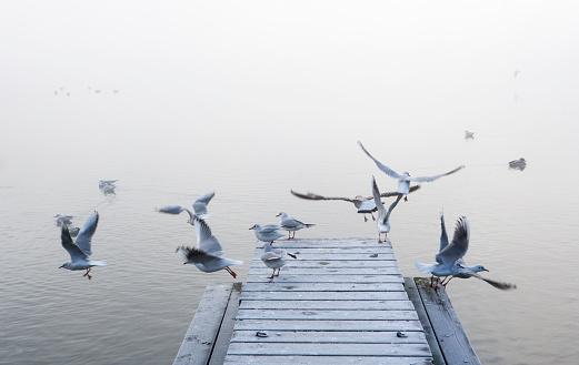 Salzkammergut「Austria, Mondsee, seagulls in morning mist」:スマホ壁紙(18)