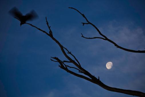 月「Flying bird and the moon」:スマホ壁紙(2)