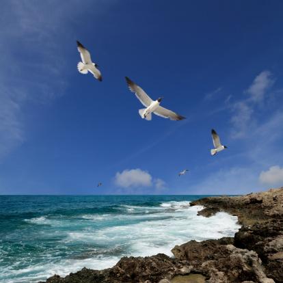 Rebellion「flying birds」:スマホ壁紙(8)