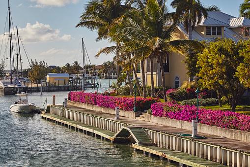 ヤシ「Moored boats surrounded by coconut palms in a Caribbean marina.」:スマホ壁紙(9)