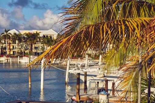 リゾート「Moored boats surrounded by coconut palms in a Caribbean marina.」:スマホ壁紙(1)