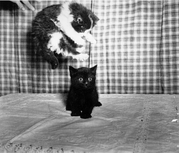 動物「Two Kittens」:写真・画像(17)[壁紙.com]