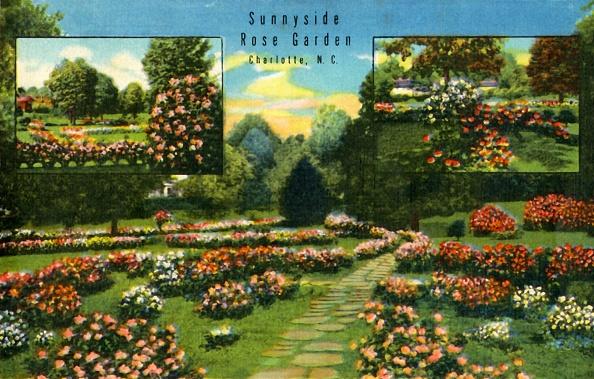 Footpath「Sunnyside Rose Garden」:写真・画像(5)[壁紙.com]