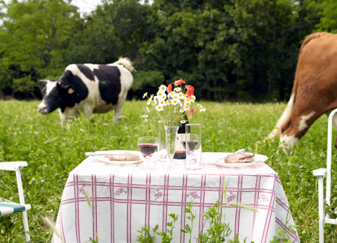 Picnic「Picnic table in middle of field of cows」:スマホ壁紙(3)