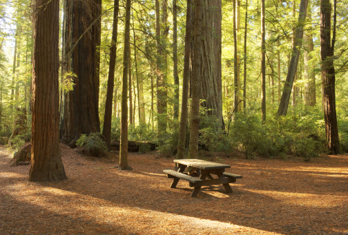Redwood Forest「Picnic Table in Campground, Redwood National Park」:スマホ壁紙(13)