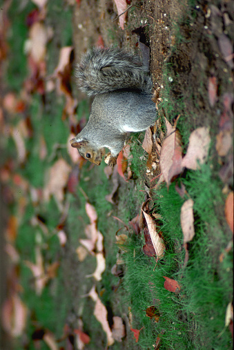 Gray Squirrel「Gray Squirrel Feeding」:スマホ壁紙(7)