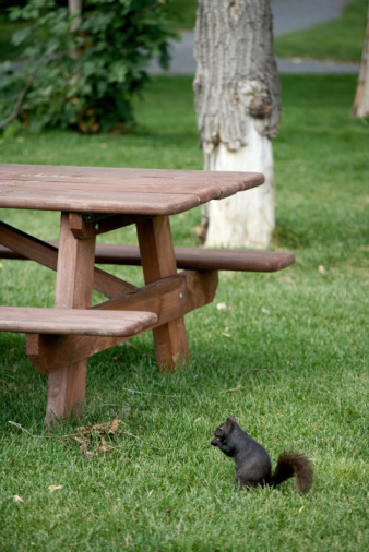 Gray Squirrel「Gray squirrel in park」:スマホ壁紙(7)