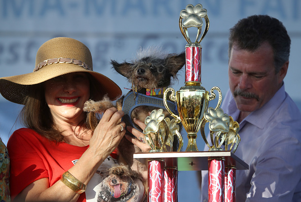 Homeless Person「Annual Ugliest Dog Competition Held In Petaluma, California」:写真・画像(2)[壁紙.com]