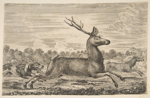 Animal Body Part「Hounds Chasing A Stag And A Doe」:写真・画像(5)[壁紙.com]
