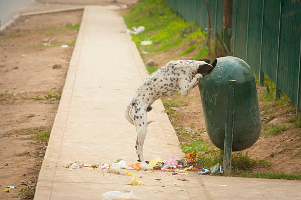 A Dog Standing On Its Hind Legs With Its Head In The Garbage Receptacle With Garbage All Over The Sidewalk:スマホ壁紙(壁紙.com)
