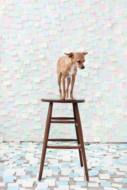 Dog standing on stool surrounded by adhesive notes:スマホ壁紙(壁紙.com)