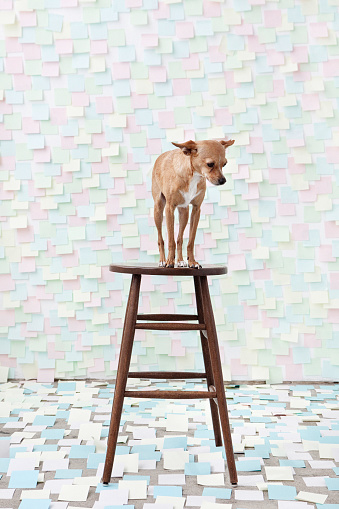 Stool「Dog standing on stool surrounded by adhesive notes」:スマホ壁紙(11)