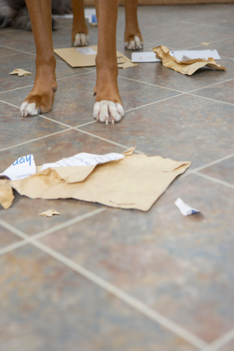 Eating「Dog standing in hallway over chewed mail, low section」:スマホ壁紙(3)