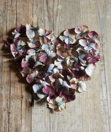 あじさい「Dried hydrangias in the shape of a heart」:スマホ壁紙(12)