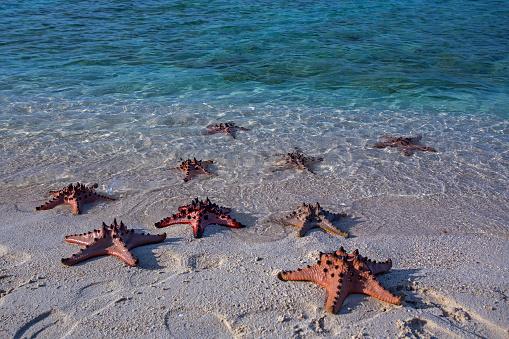 ビーチ「Starfish on a tropical beach, Beitung Island, Indonesia」:スマホ壁紙(5)