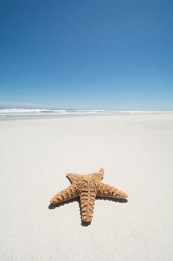 ビーチ「Starfish on empty sandy beach」:スマホ壁紙(3)