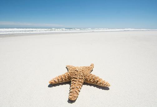 ビーチ「Starfish on empty sandy beach」:スマホ壁紙(5)