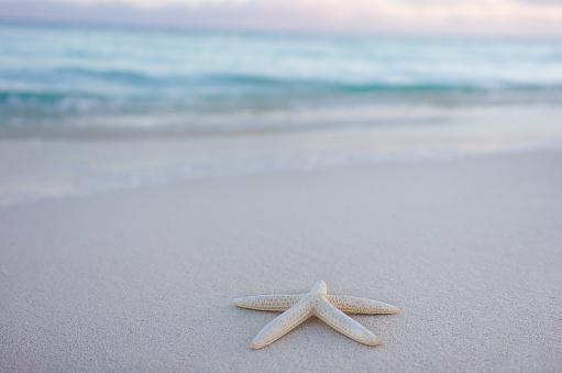 Pastel「Starfish on beach, Turks and Caicos, Caribbean」:スマホ壁紙(2)