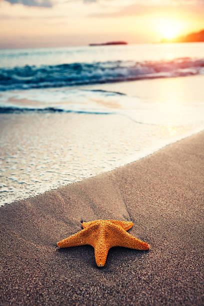 Starfish On The Beach:スマホ壁紙(壁紙.com)