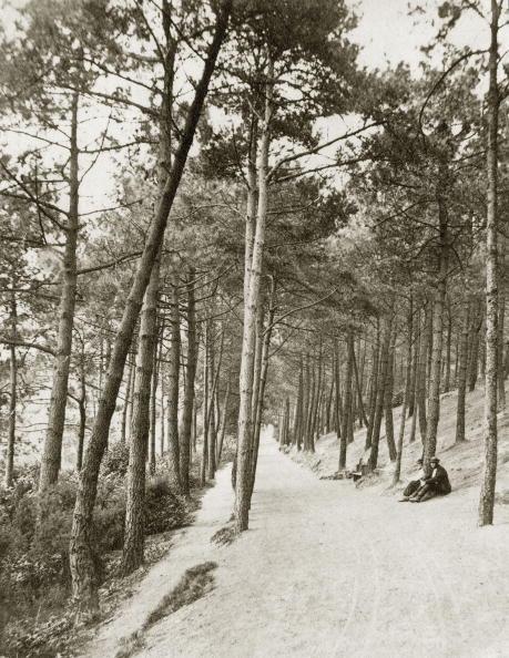 Footpath「Woodland Path」:写真・画像(14)[壁紙.com]