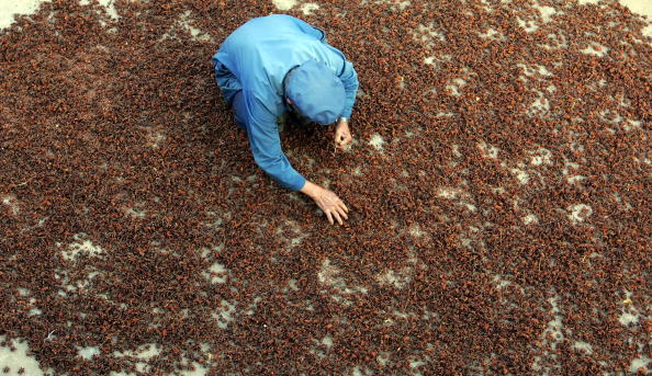 Star Anise「Chinese Fruit Star Anise Becomes Secret Weapon Against Bird Flu」:写真・画像(16)[壁紙.com]