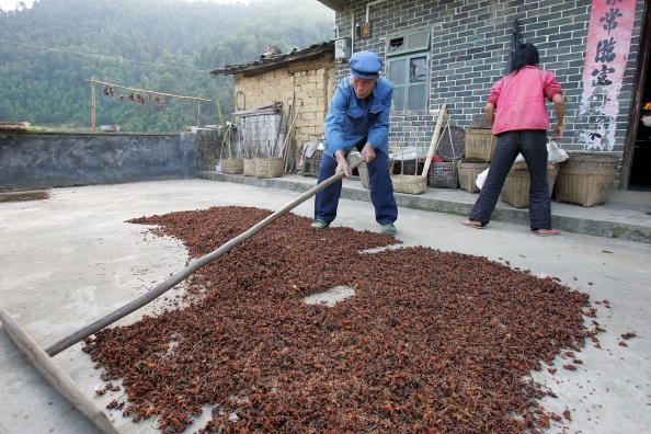 Star Anise「Chinese Fruit Star Anise Becomes Secret Weapon Against Bird Flu」:写真・画像(13)[壁紙.com]