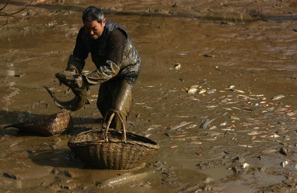 Animal Wildlife「Farmer Harvest Fish For Chinese Lunar New Year」:写真・画像(18)[壁紙.com]