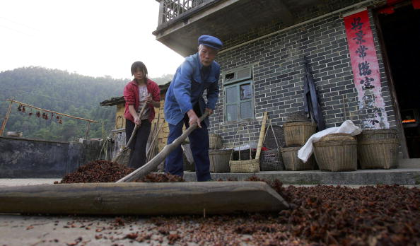 Star Anise「Chinese Fruit Star Anise Becomes Secret Weapon Against Bird Flu」:写真・画像(14)[壁紙.com]