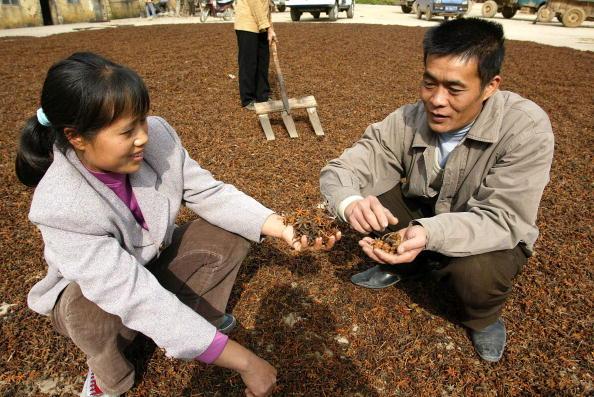 Star Anise「Chinese Fruit Star Anise Becomes Secret Weapon Against Bird Flu」:写真・画像(10)[壁紙.com]