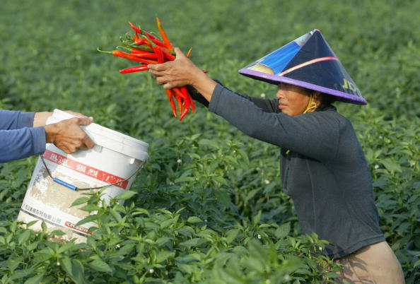 Hainan Island「Chinese Farmers Work At A Field In China」:写真・画像(1)[壁紙.com]